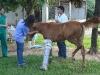 clinicadorancho018