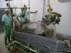 clinicadorancho114